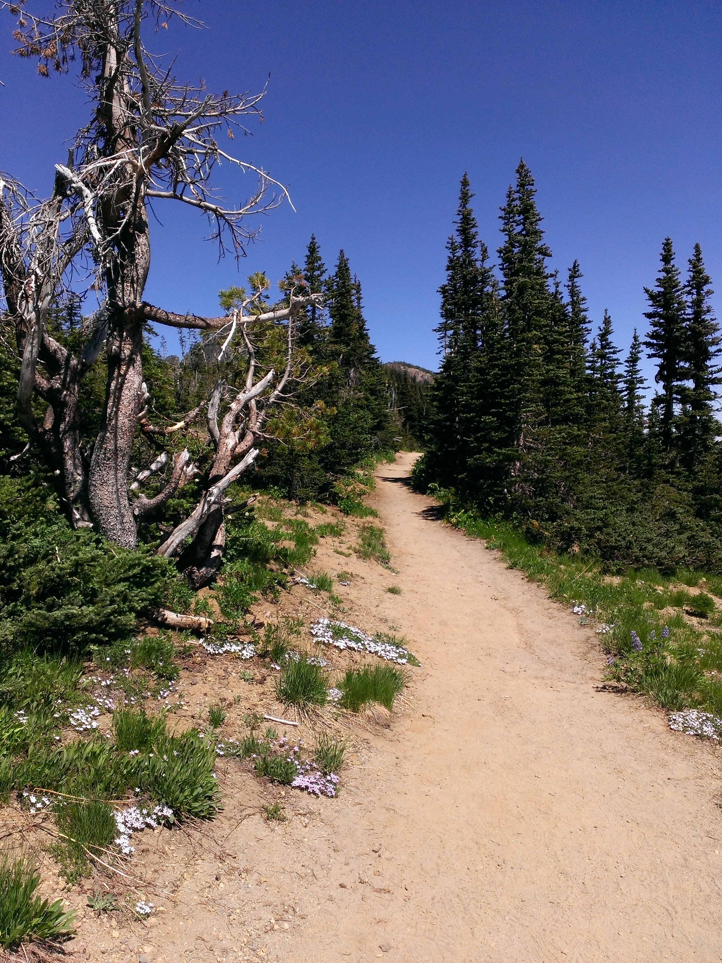 Sourdough Trail